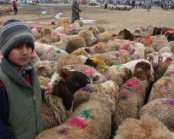 В Чечне раскритиковали общественную акцию Фонда Кадырова