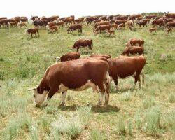 Аналитики зафиксировали снижение сельхозпроизводства на Ставрополье