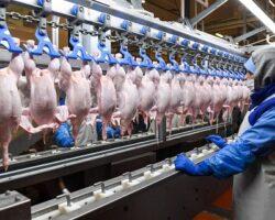 Впервые мясо птицы из Ставрополья отправлено в Анголу