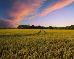 Крупнейшие владельцы сельхозземель: 2 компании Северного Кавказа вошли в общероссийский рейтинг